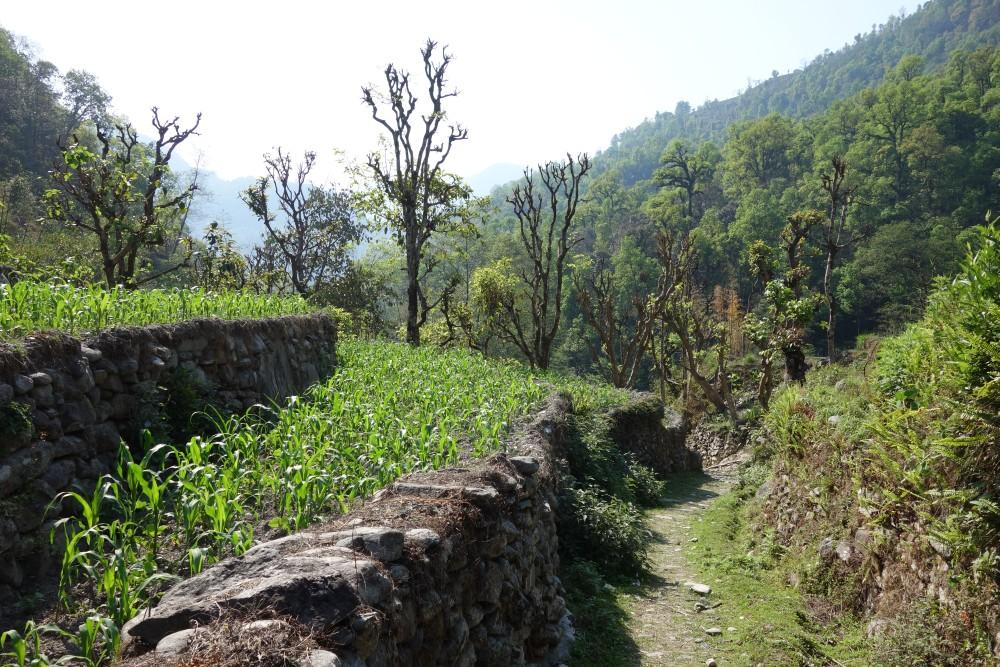 Durchquerung landwirtschaftlicher Anbauflächen auf dem Weg nach Nayapul