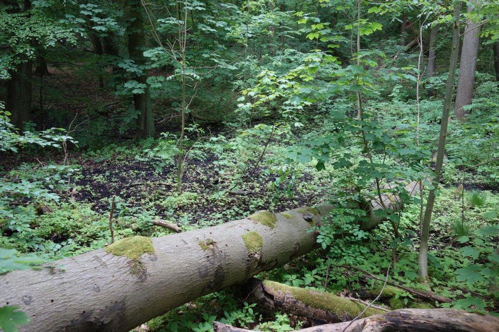 Sumpfgebiet am Oderlandweg