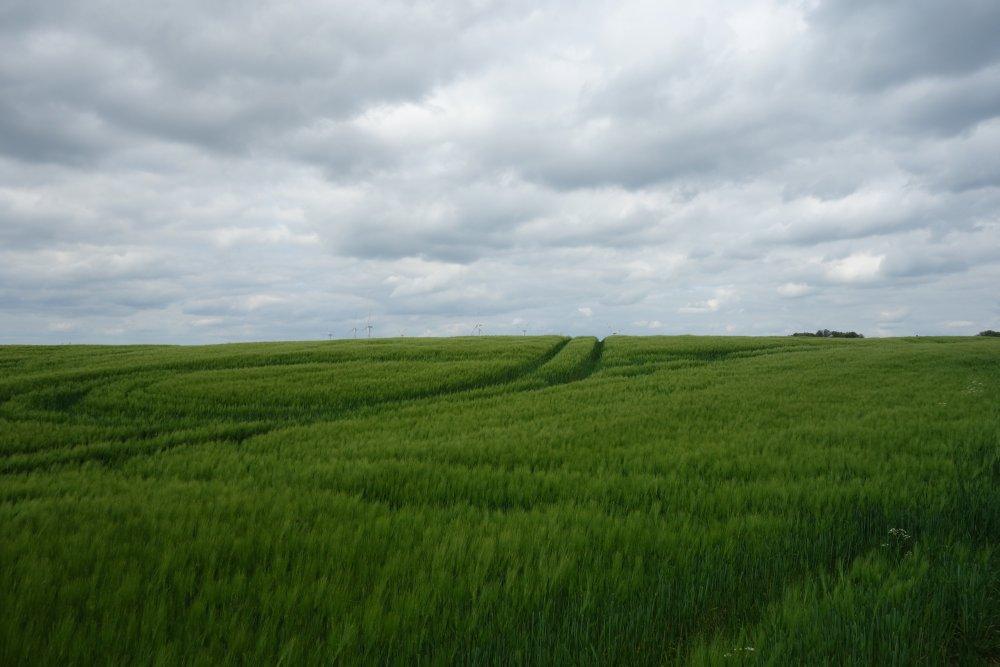 Felder am Oderlandweg
