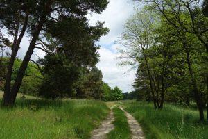 Naturschutzgebiet Biesdorfer Kehlen