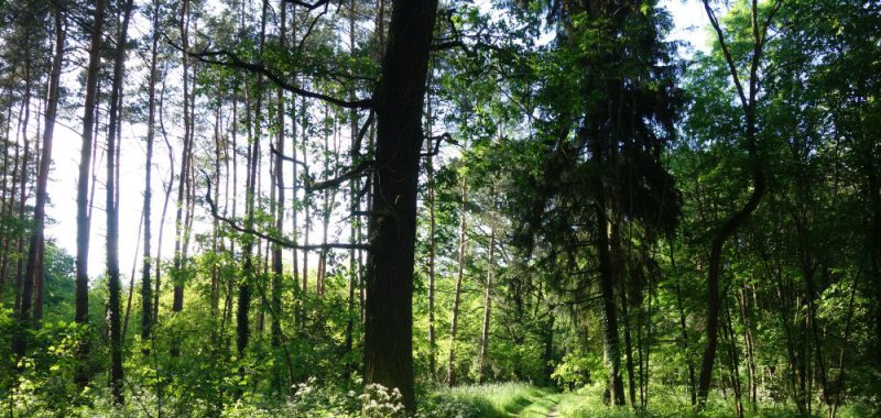 Tag 2: Haselberger Heide – Altranft