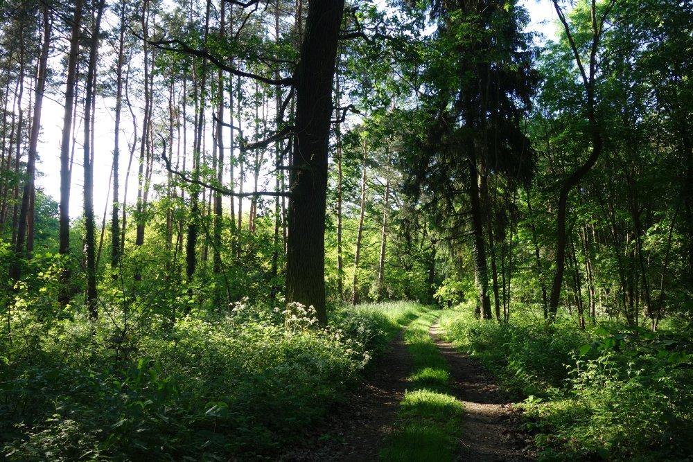 Hutelandschaft Altranft-Sonnenburg