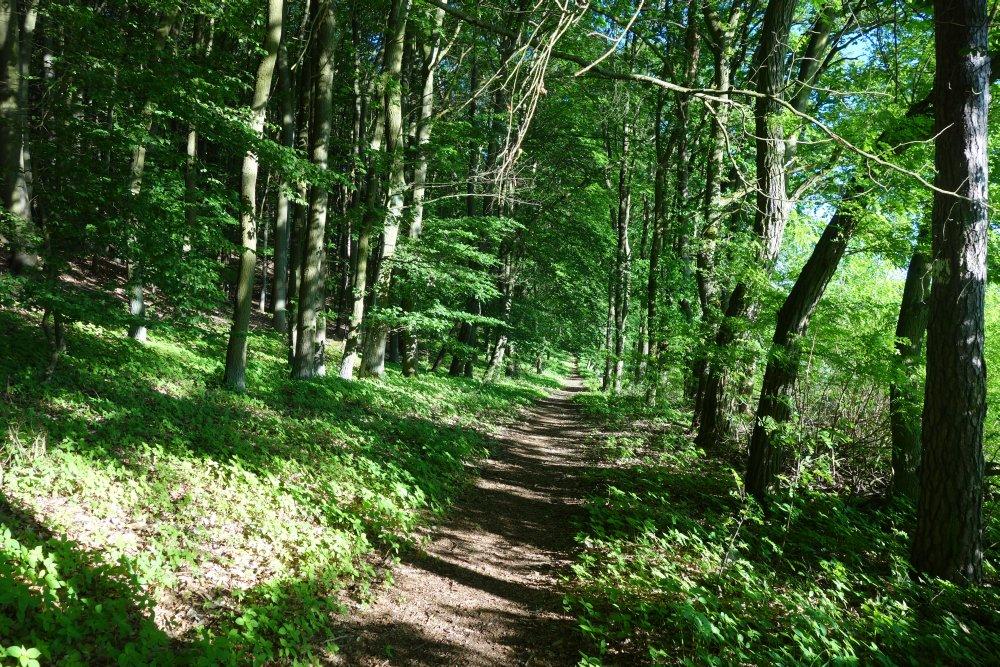 Oderlandweg nach Bad Freienwalde (Oder)