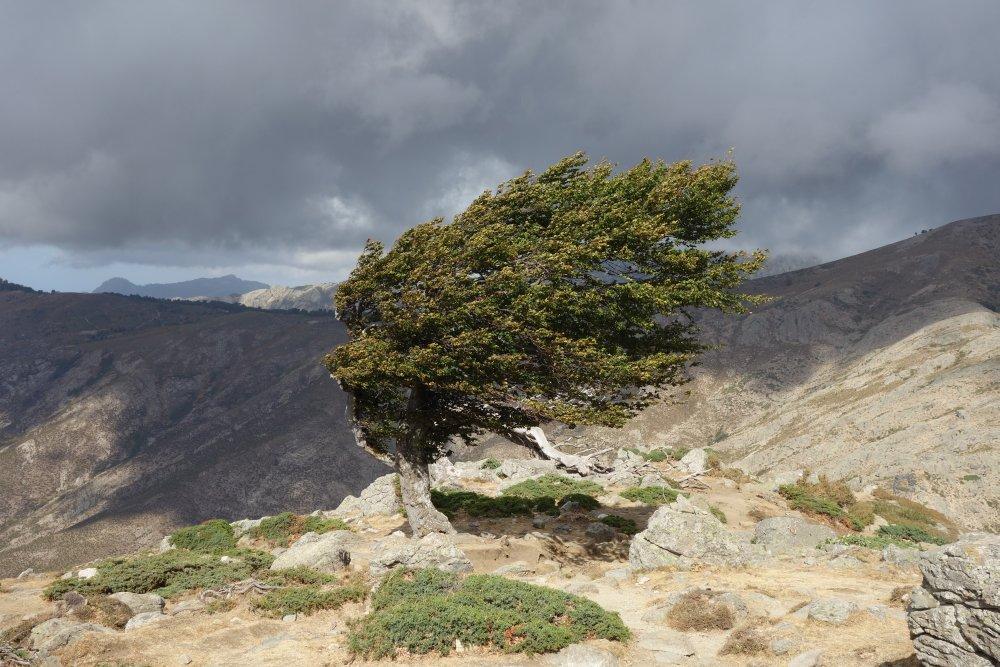 Vom Wind verbogener Baum