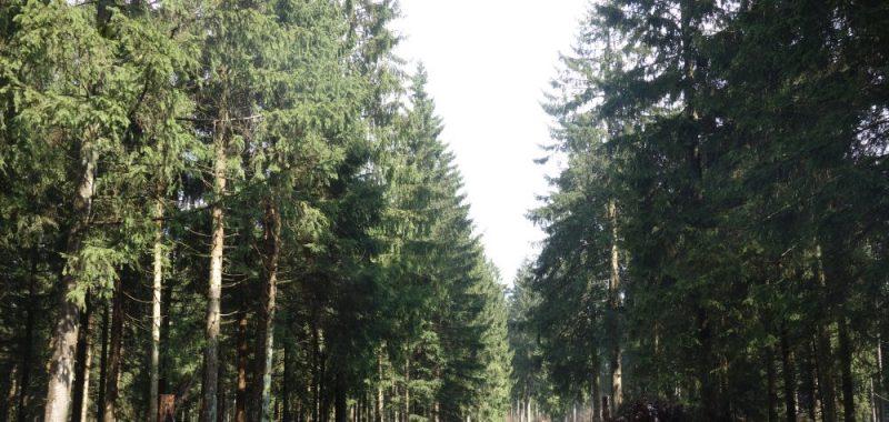 Tag 1: Osterode – Altenau