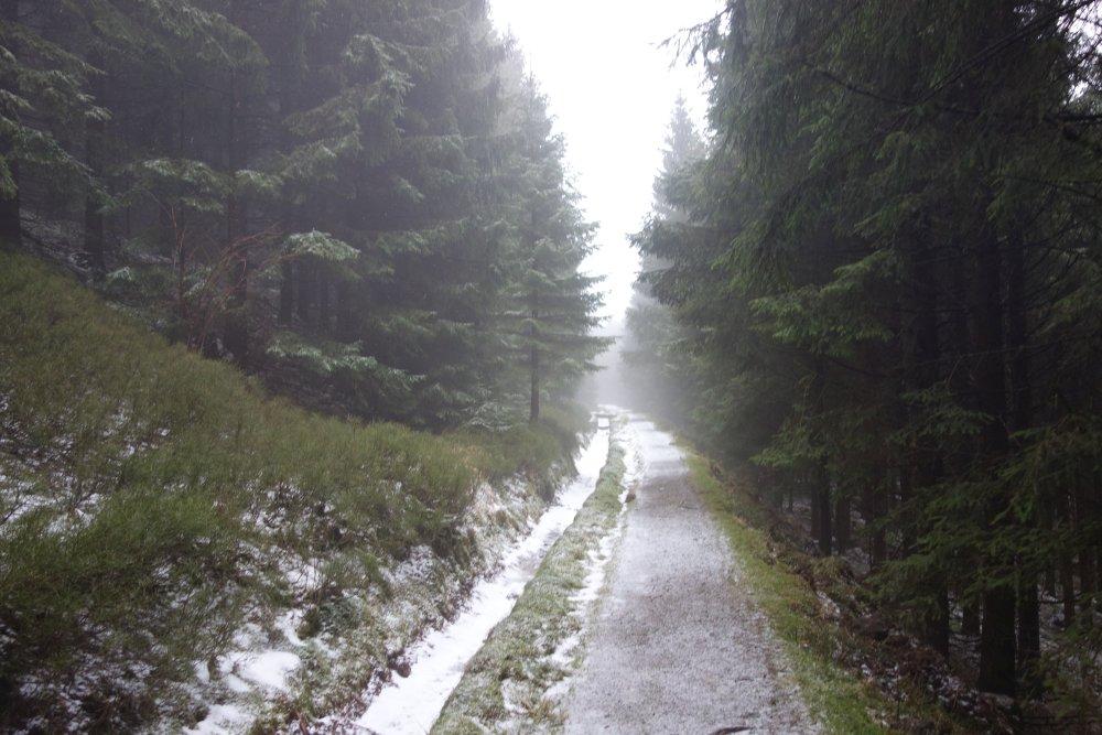 Harzer-Hexen-Stieg bei Neben und Schnee