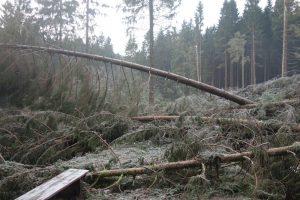Baummassaker