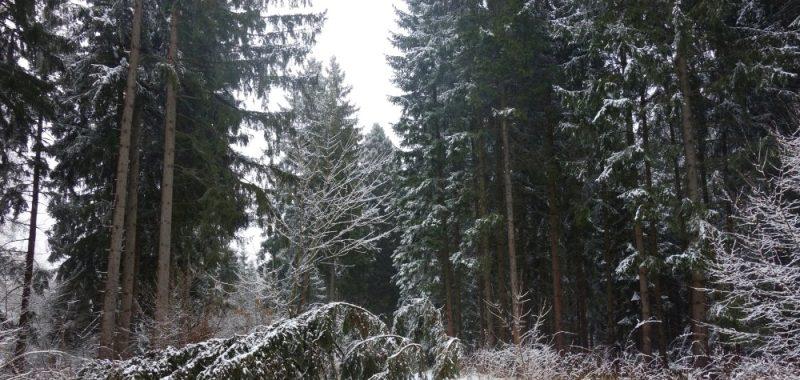 Tag 3: Drei Annen Hohne – Wendefurth