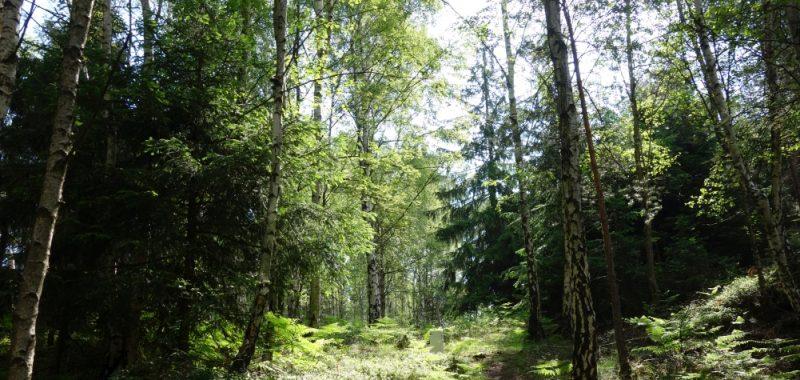 Tag 4: Grenzplatte Biwak – Spitzstein Biwak