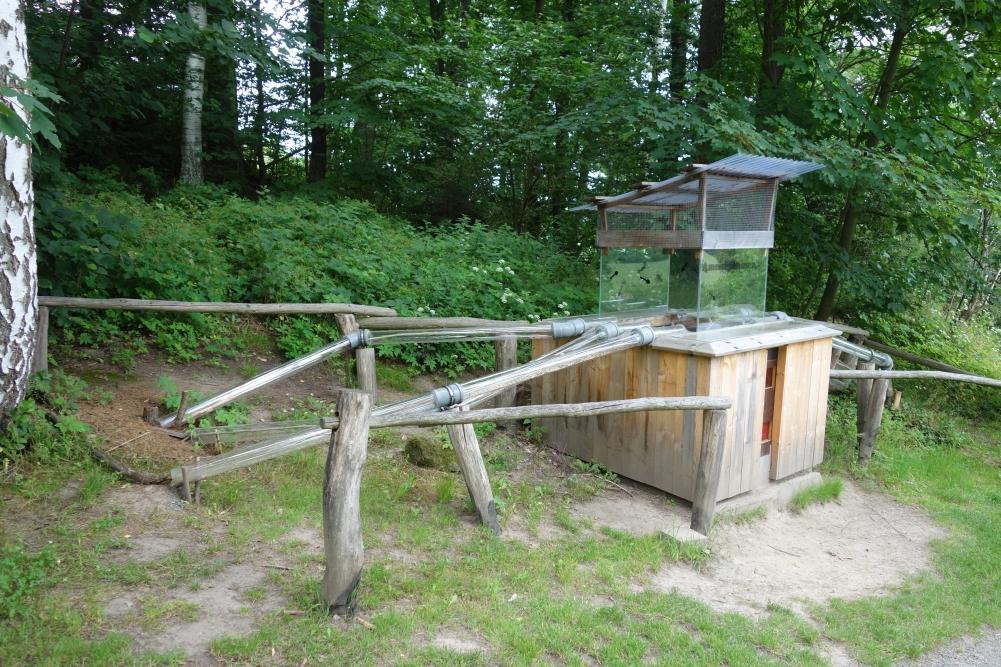 Terrarium für die Ameisenkolonie