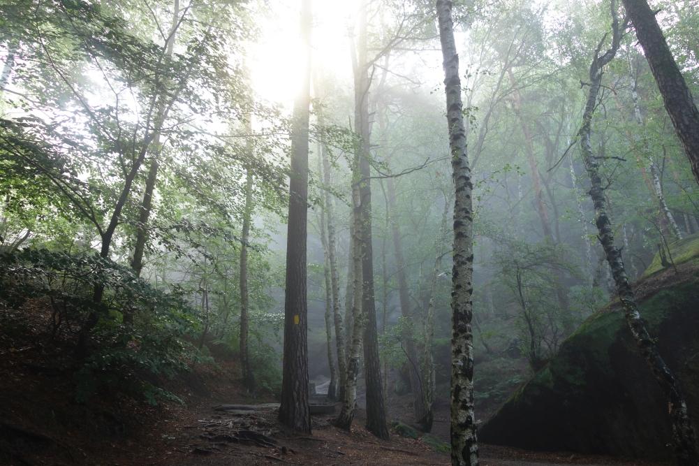 Nebelverhangener Wald am Morgen